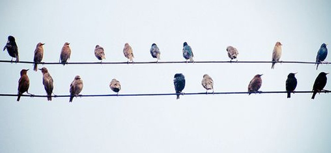 Oiseaux-1.jpg